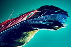 red blue yellow feather