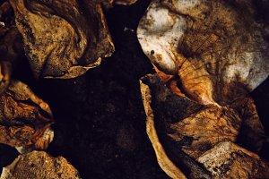 decay fungus