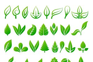 Leaf icons vector illustration