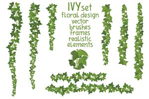 Ivy vector set for floral design