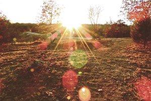 Sunset Lense Flare
