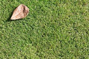 Dried leaf on grass