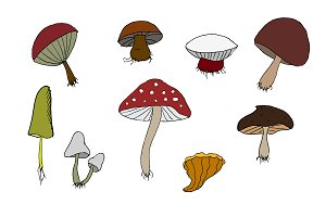 Wood mushrooms set. Hand drawn
