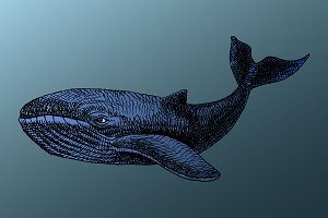 White whale under water. Vector