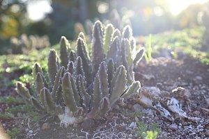 Island Cactus 2