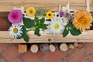 flowers on wood