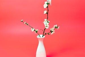 cherry twig in vase