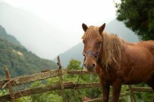 Red horse in the farm