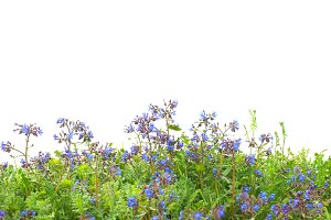 Pattern of blue flowers and grass
