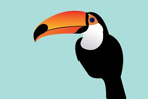 toucan vector/illustration