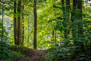 Bright green forest with natural walkway in sunny day light