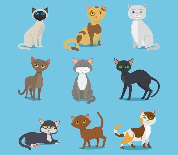 Cartoon domestic cat set
