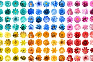 120 HQ flowers isolated on white
