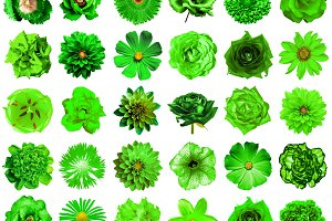 30 green flowers isolated on white