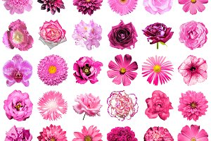 30 pink flowers isolated on white