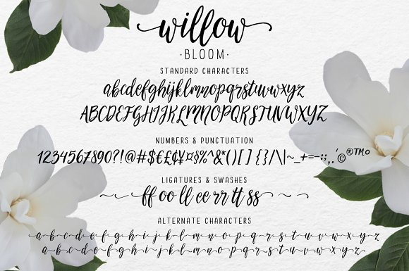 Modern calligraphy font willow bloom script fonts creative market stopboris