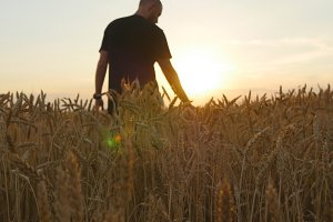 Man running through wheat field