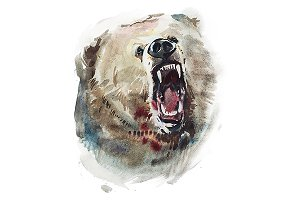 Watercolor drawing of bear