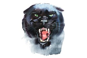 Watercolor panther.