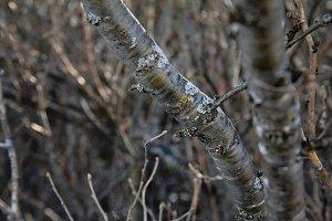 metallic trees with lichen