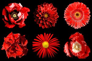 Red flowers 6 in 1 isolated on black