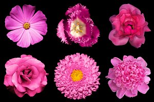 6 pink flowers isolated on black