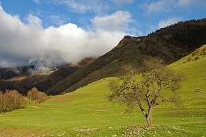 Spring in the Caucasian mountains.