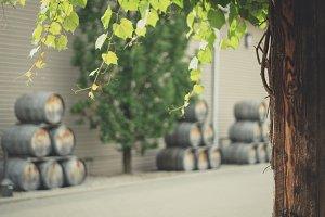 Vine and wine barrel