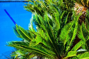Palm trees sunny sky