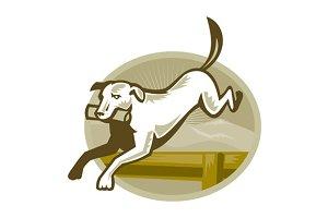Retriever Dog Training Jumping Hurdl