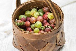 Basket full of ripe gooseberries