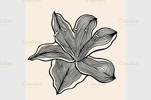 Monochrome abstract doodle flowers