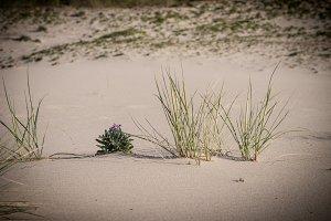 Grass in the beach sand