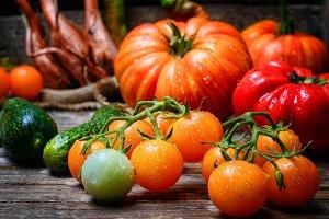 harvest summer tomatoes