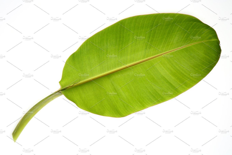 Banana leaf isolated ~ Nature Photos ~ Creative Market