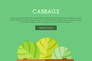 Cabbage Vector Web Banner
