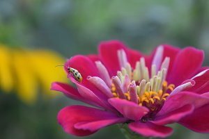 closeup of insect on pink flower