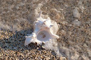 White seashell on the sea