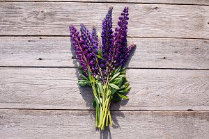Violet lupines on wooden background