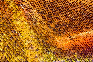 gold Fish Scales Background