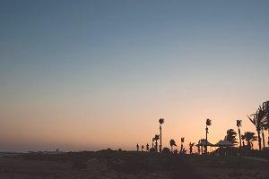 Palm trees sunset golden blue