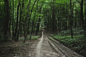 Bike Pathway in the Forest