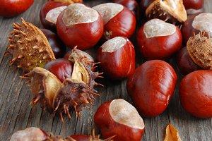 Chestnut Background