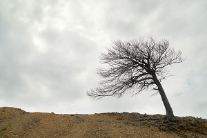 Lonely naked tree