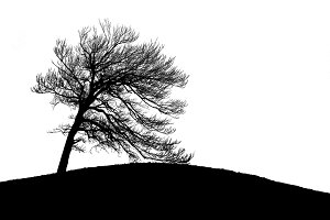 Lonely tree silhouette