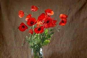 Poppies in the vase