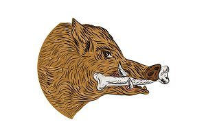 Wild Boar Razorback Bone