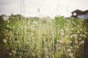 Vintage field nature