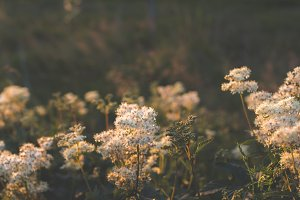 Beautiful Wild Flowers & Evening Sun