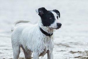 Spotty watchdog